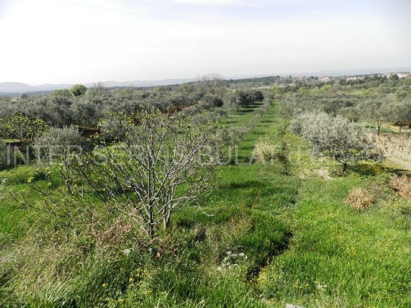 Nekretnine Hrvatska Poljoprivredno zemljište Skradin